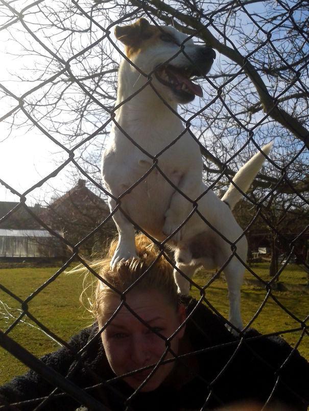 cachorro-subiu-na-cabeça-de-dona