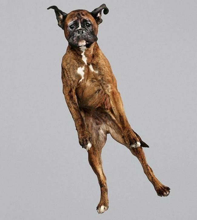cachorro-voando-serio