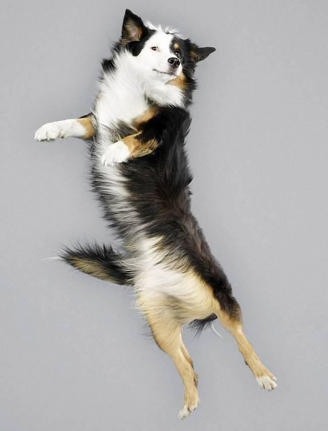 cachorro-voando