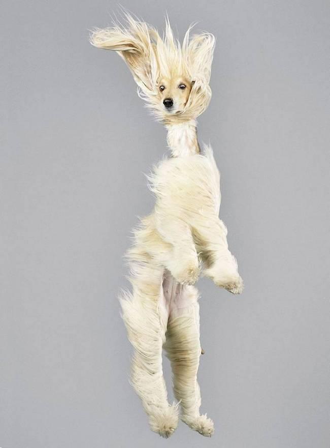 cadela-voando-cabelos-ao-vento