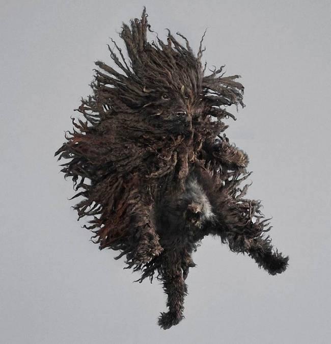 cachorro-peludo-com-dreads-voando