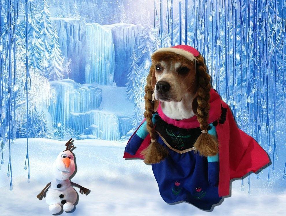 cadela-fantasiada-de-anna-de-frozen-disney