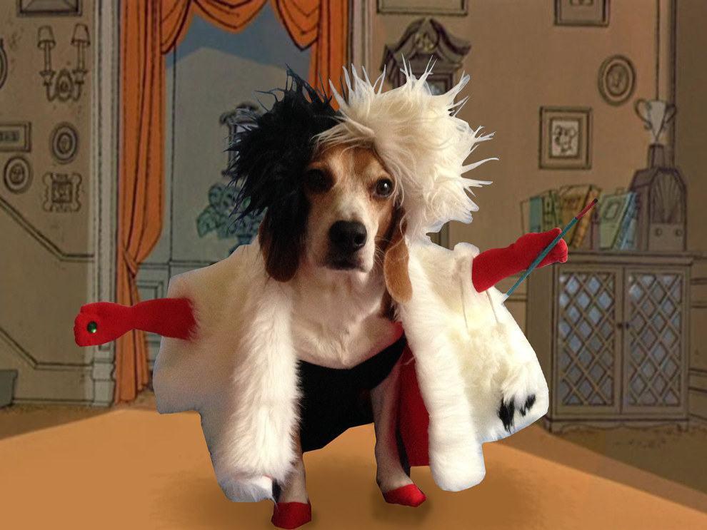 cadela-fantasiada-de-cruela-101-dalmatas