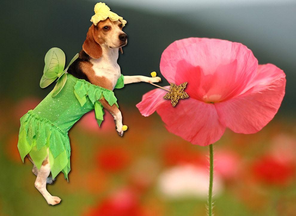 cadela-fantasiada-de-fada-sininho