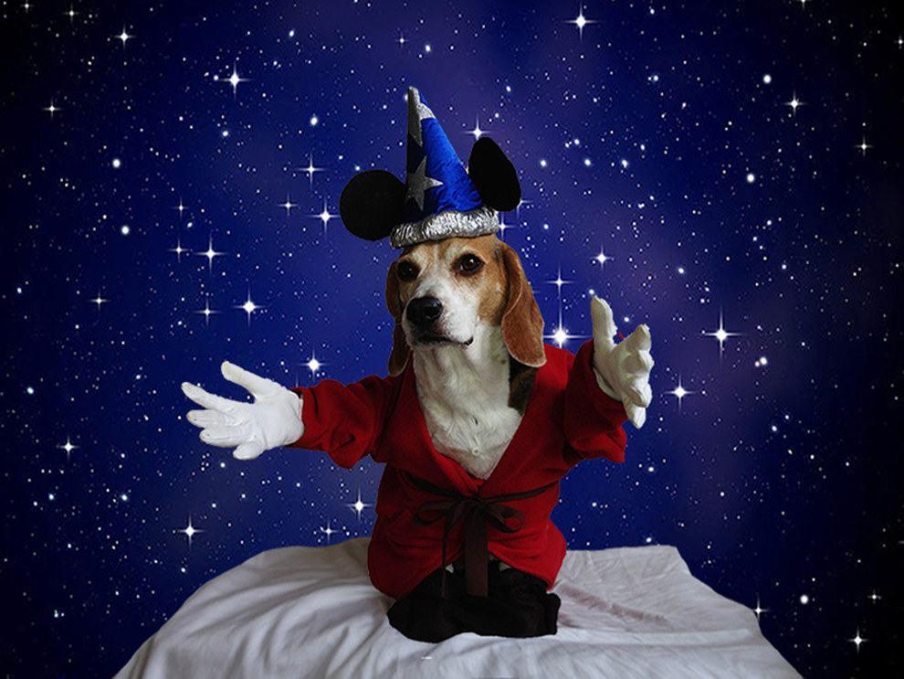 cadela-fantasiada-de-mickey-magico