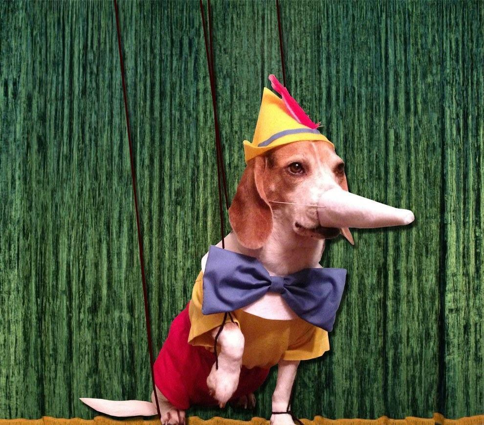 cadela-fantasiada-de-pinoquio