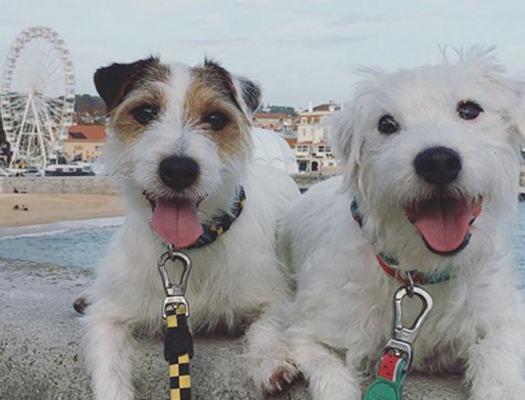 casal-de-caes-viaja-por-portugal