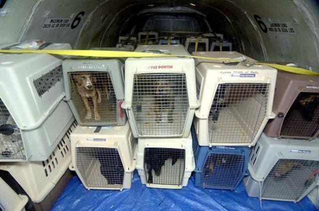 Companhia aérea não irá mais transportar animais junto a bagagens