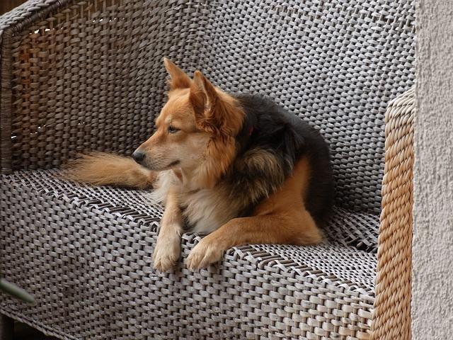 Dicas e orientações para deixar o cão sozinho em casa