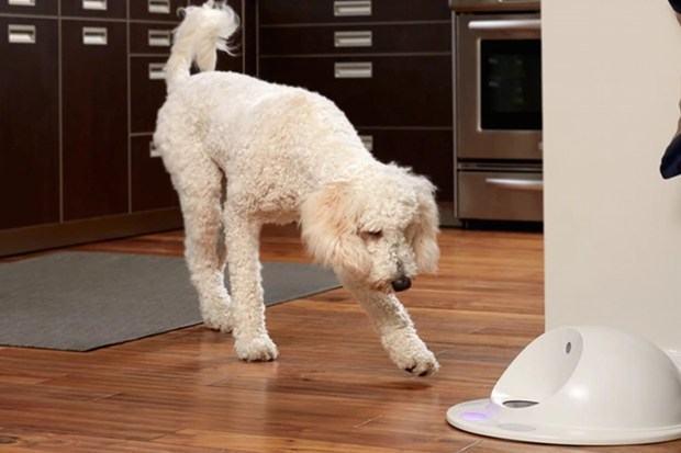 Empresa inova e cria game para cachorros