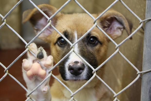 EUA: FBI eleva nível de punição por crimes de crueldade contra animais