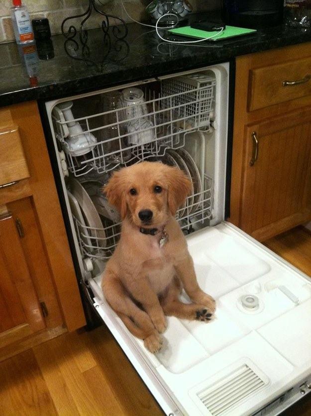 filhote-quer-ajudar-a-lavar-a-louça