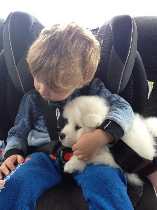 garotinho-abraçado-com-cachorro-em-carro