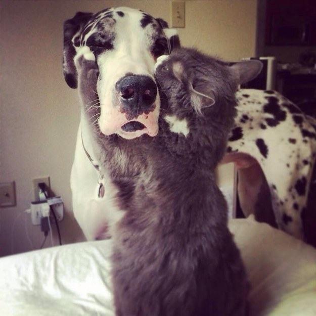 gato-abraçando-cachorro