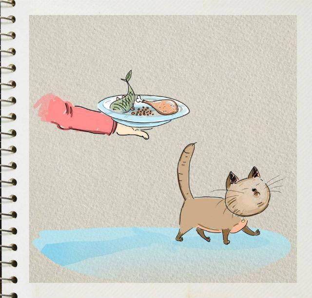 gato-recebendo-refeicao-de-dono