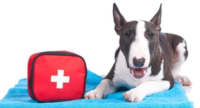 What to Pack a Pet First-Aid Kit