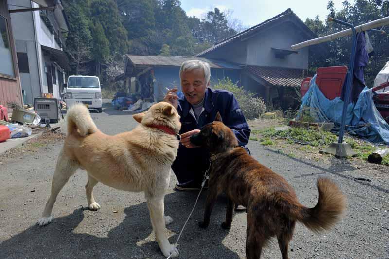 Fukushima: japonês desafia radiação para cuidar de animais abandonados