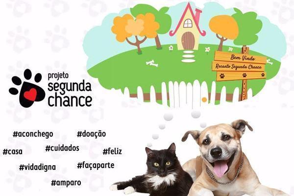 ONG cria campanha para construção de santuário animal
