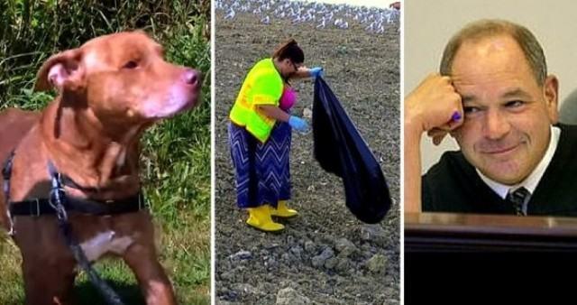 Após abandonar cão, tutora é sentenciada a trabalhar em aterro sanitário
