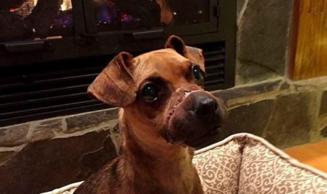 Homem é condenado e preso após amarrar e amordaçar cachorro