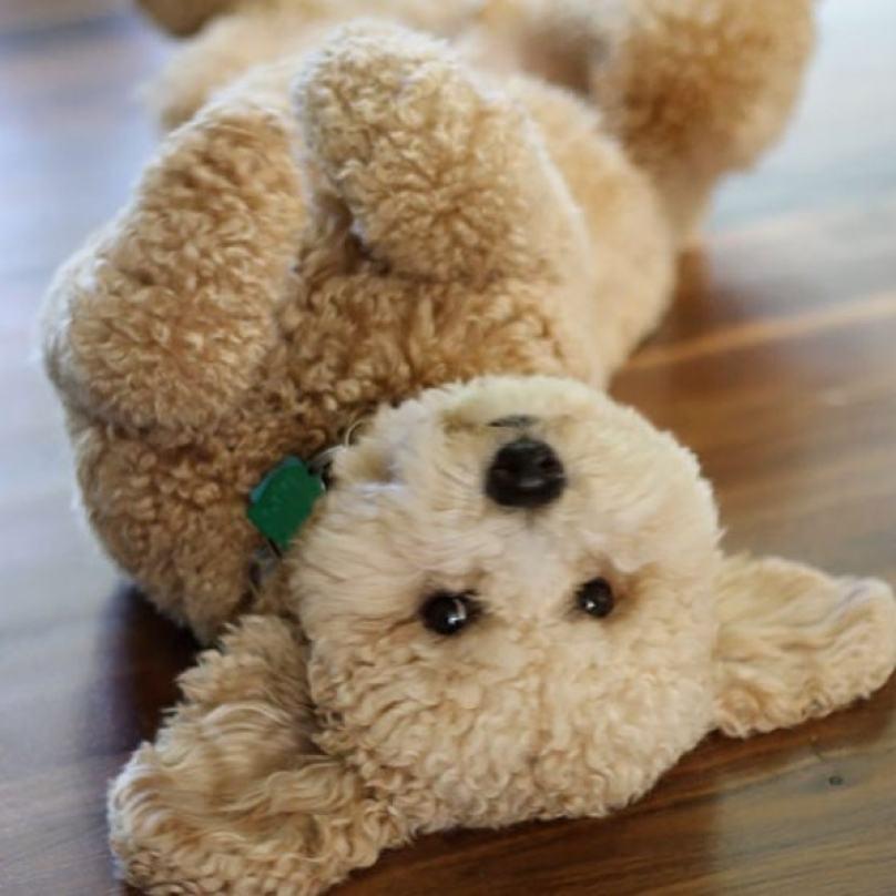 cachorrinho-peludo-como-pelucia