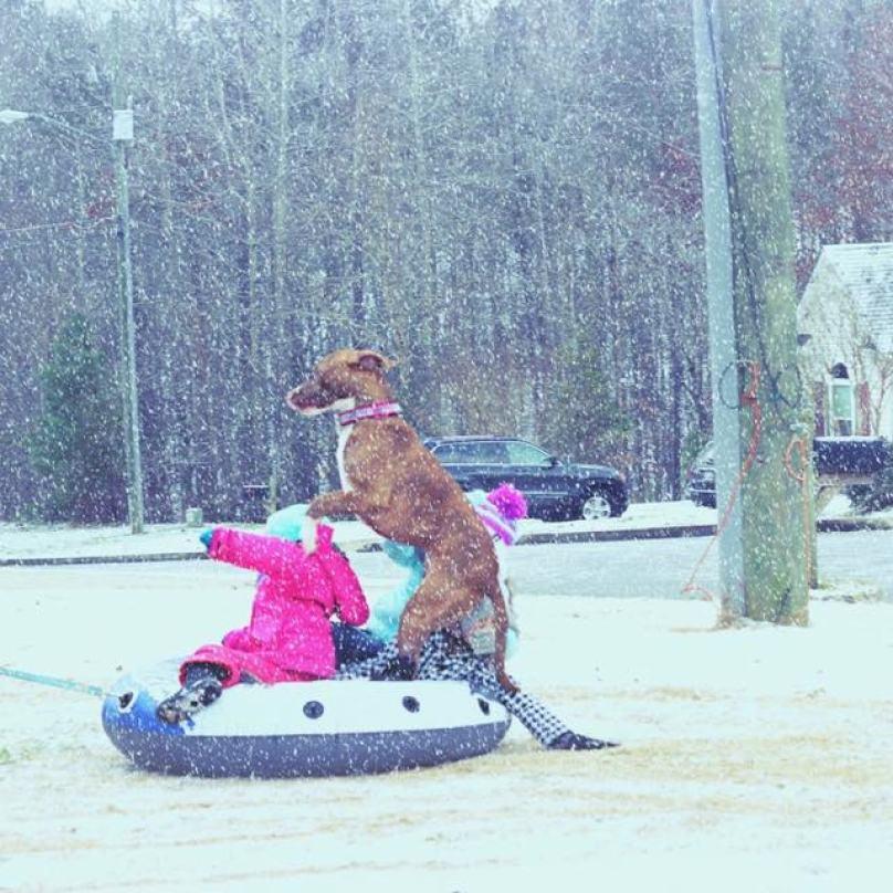 cachorro-brincando-com-crianças-na-neve