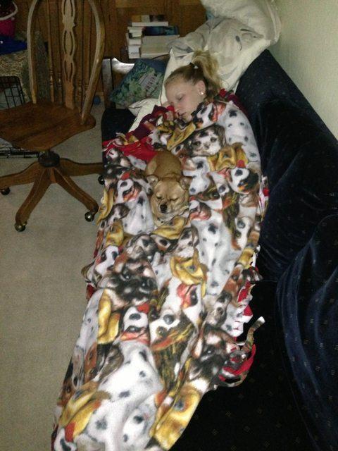 cachorro-camuflado-em-cobertor-de-tutora