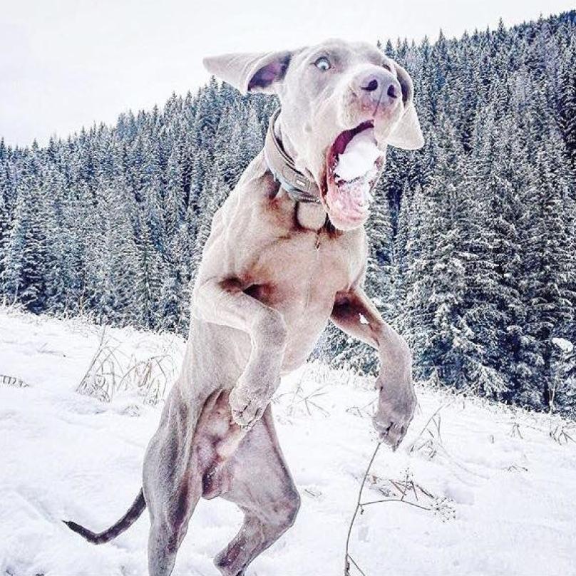 cachorro-com-bola-de-neve-na-boca