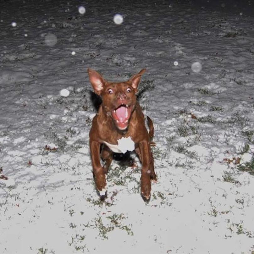 cachorro-correndo-da-neve