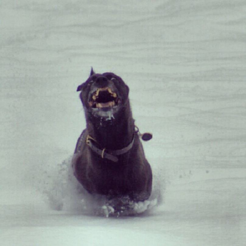 cachorro-correndo-na-neve