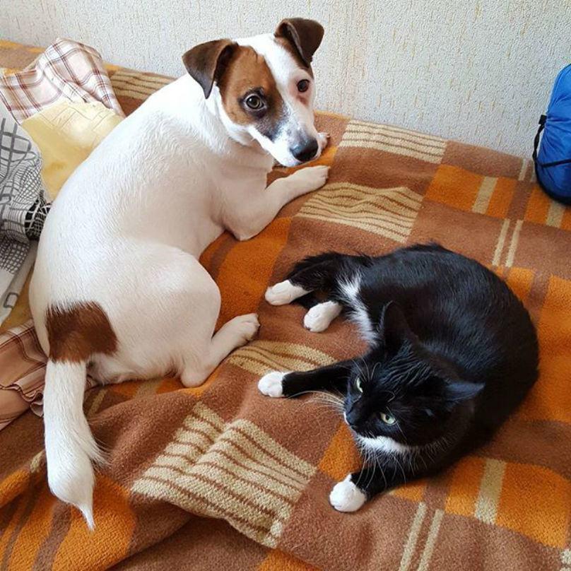 cachorro-dando-atenção-ao-dono-ao-lado-de-gato