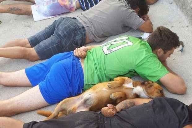 Em ação policial, cão inocentemente deita no chão ao lado de suspeitos