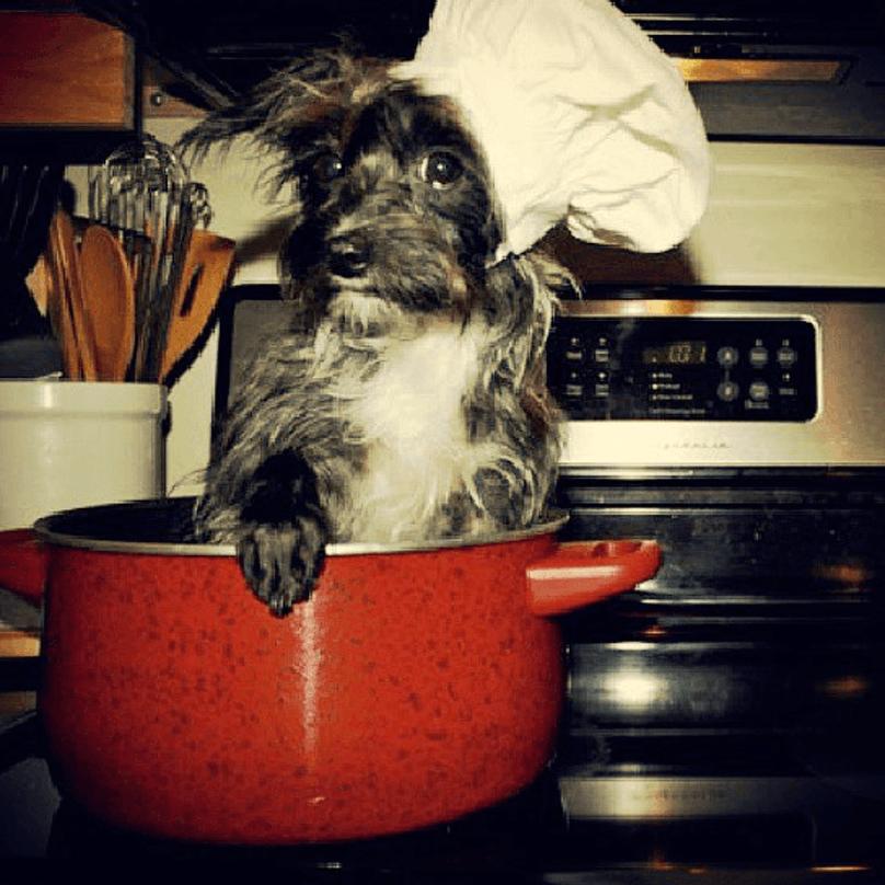 cachorro-dentro-de-panela