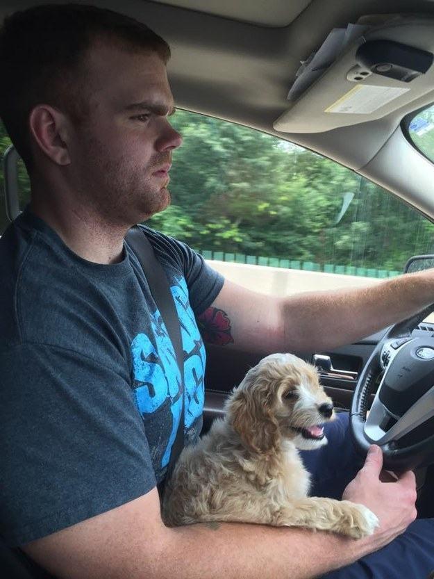 cachorro-dirigindo-junto-ao-dono-para-nova-casa