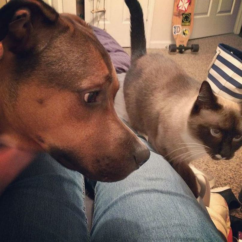 cachorro-encarando-gato