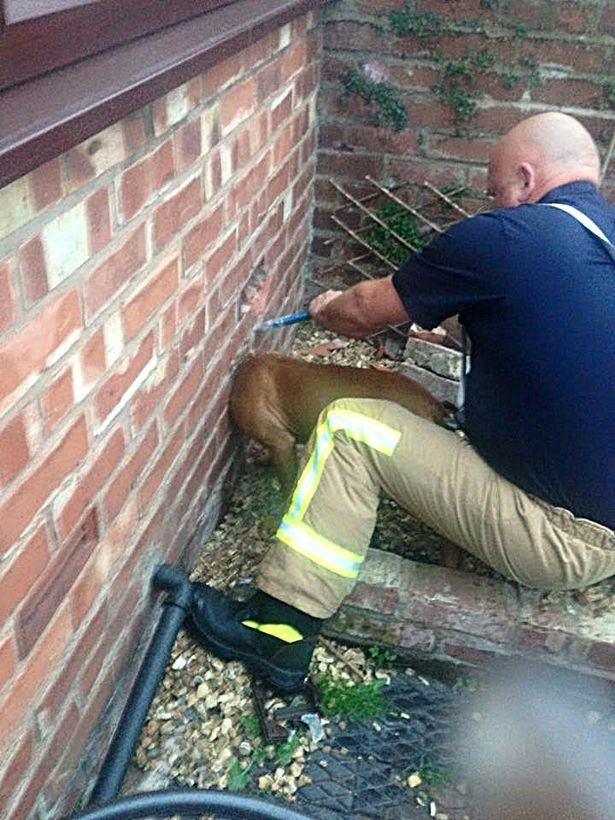 cachorro-ficou-preso-ao-enfiar-cabeça-dentro-de-parede-bombeiro