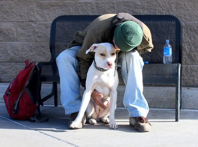 Cachorro gosta é de carinho, diz pesquisa