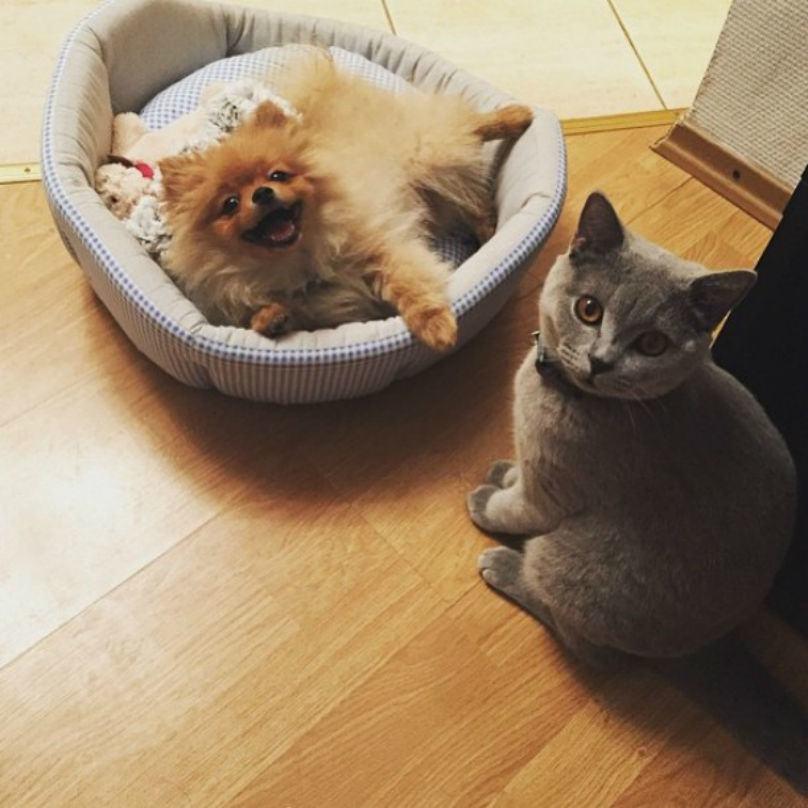 cachorro-olhando-feliz-para-dono-gato-nem-liga