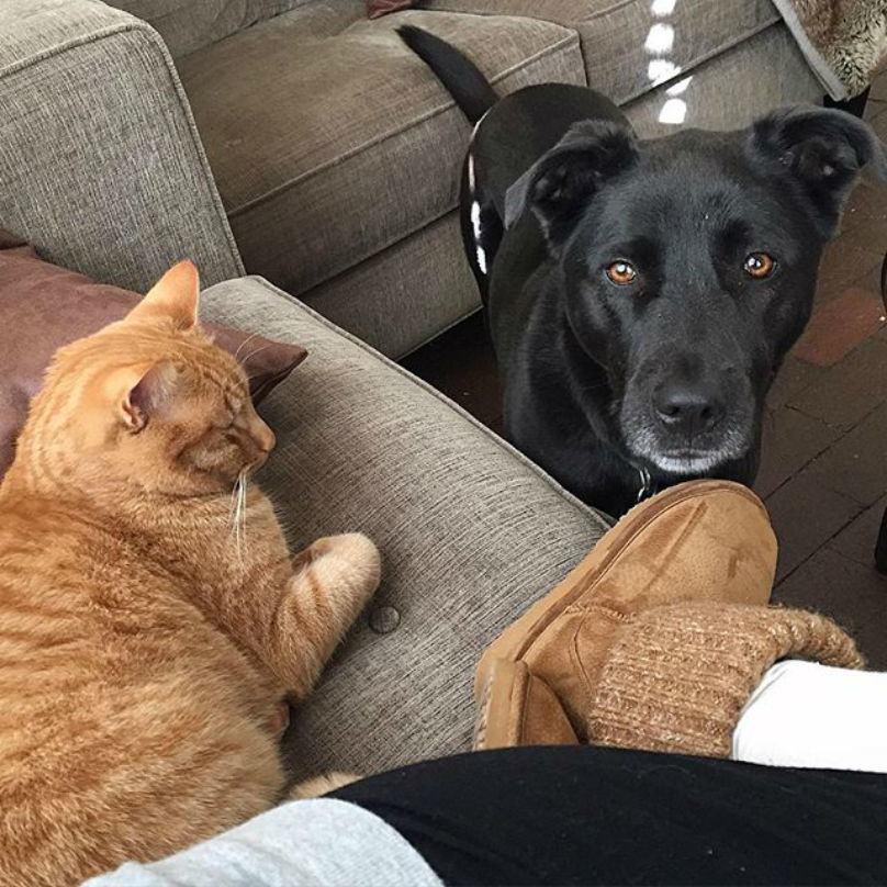 cachorro-olhando-para-dono-e-gato-o-ignorando