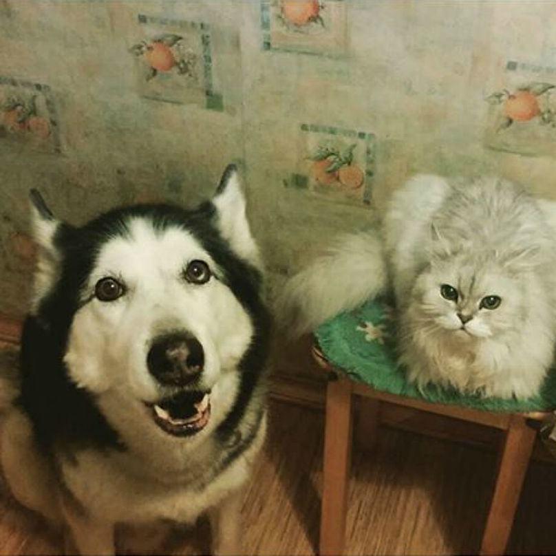 cachorro-parece-mais-feliz-em-ver-dono-do-que-gato
