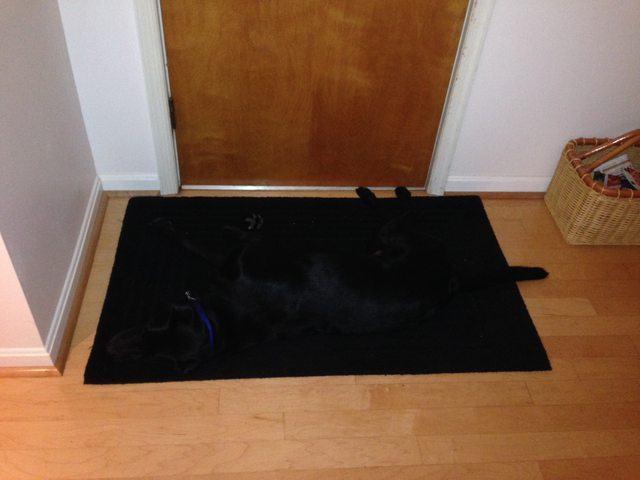 cachorro-preto-camuflado-em-tapete-da-mesma-cor