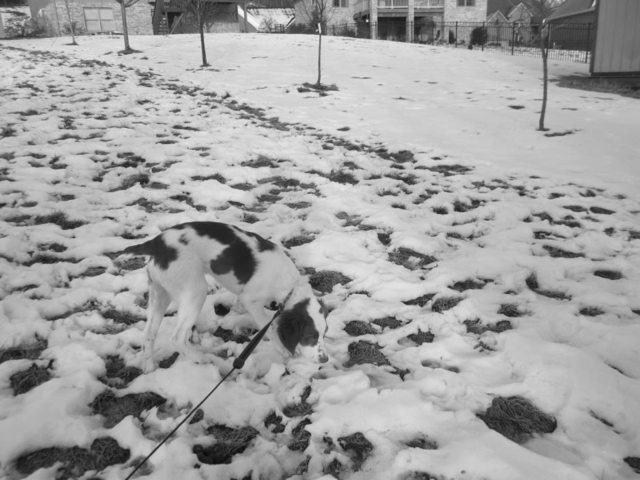 cachorro-se-camufla-em-meio-a-neve