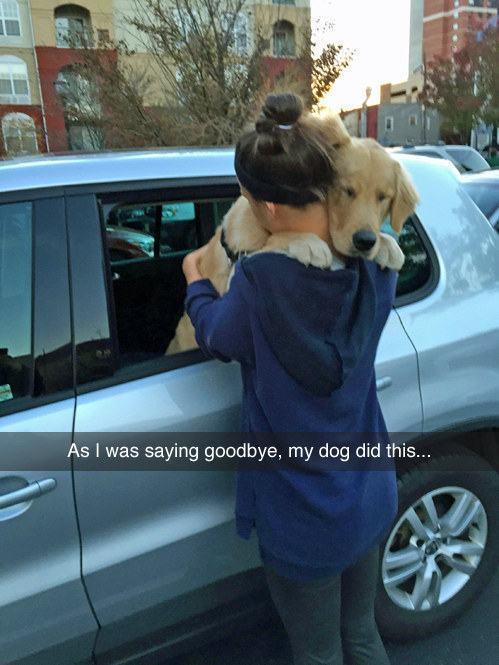 cachorro-se-despedindo-de-dona-com-abraço