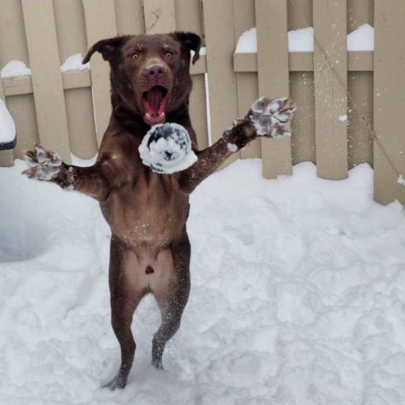 cachorro-tentando-pegar-bola-congelada