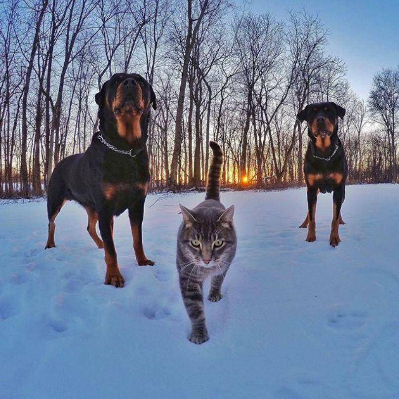 caes-na-neve-junto-a-gato