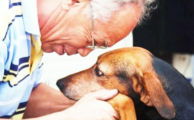 Convivência com os animais faz bem para pessoas idosas