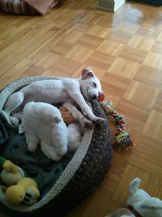 filhote-adotado-deitando-em-sua-cama-nova
