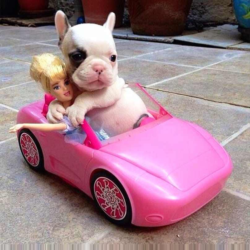 filhote-dentro-de-carrinho-de-brinquedo-com-barbie