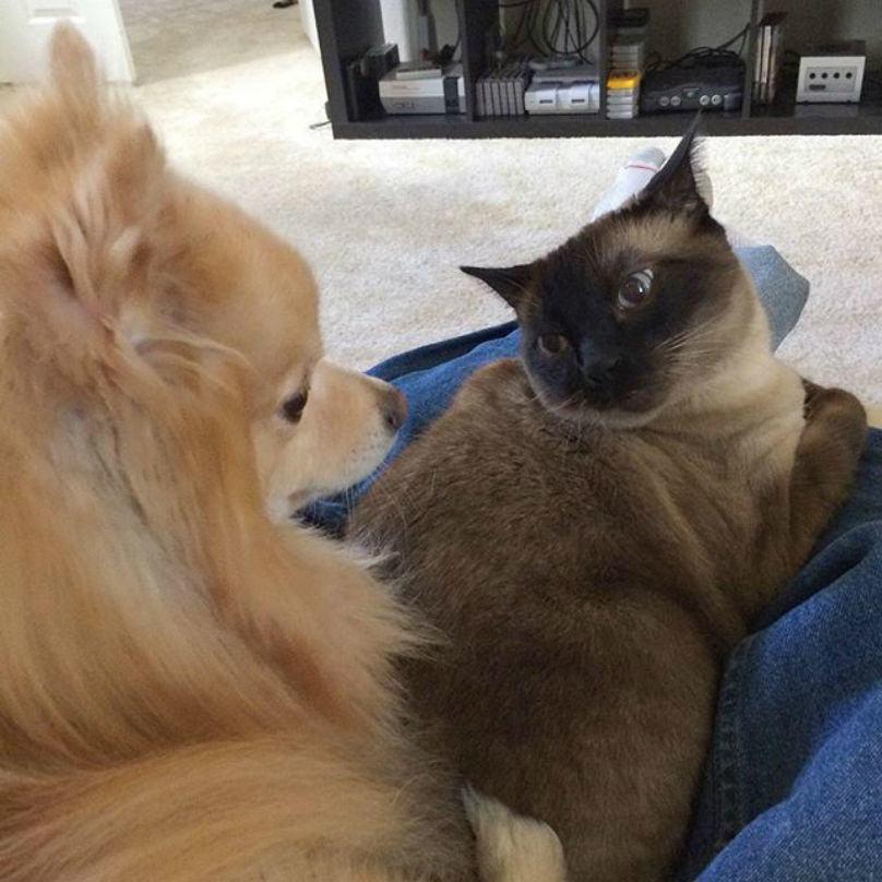 gato-encarando-cachorro