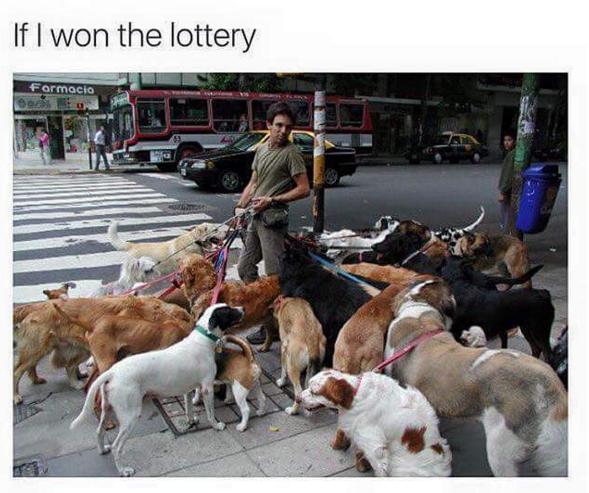 homem-passeado-com-varios-cachorros